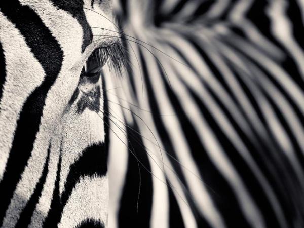 Creatures-Antti-Viitala-15