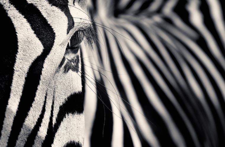 svart hvite bilder av dyr