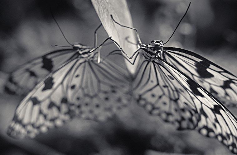 Creatures-Antti-Viitala-7