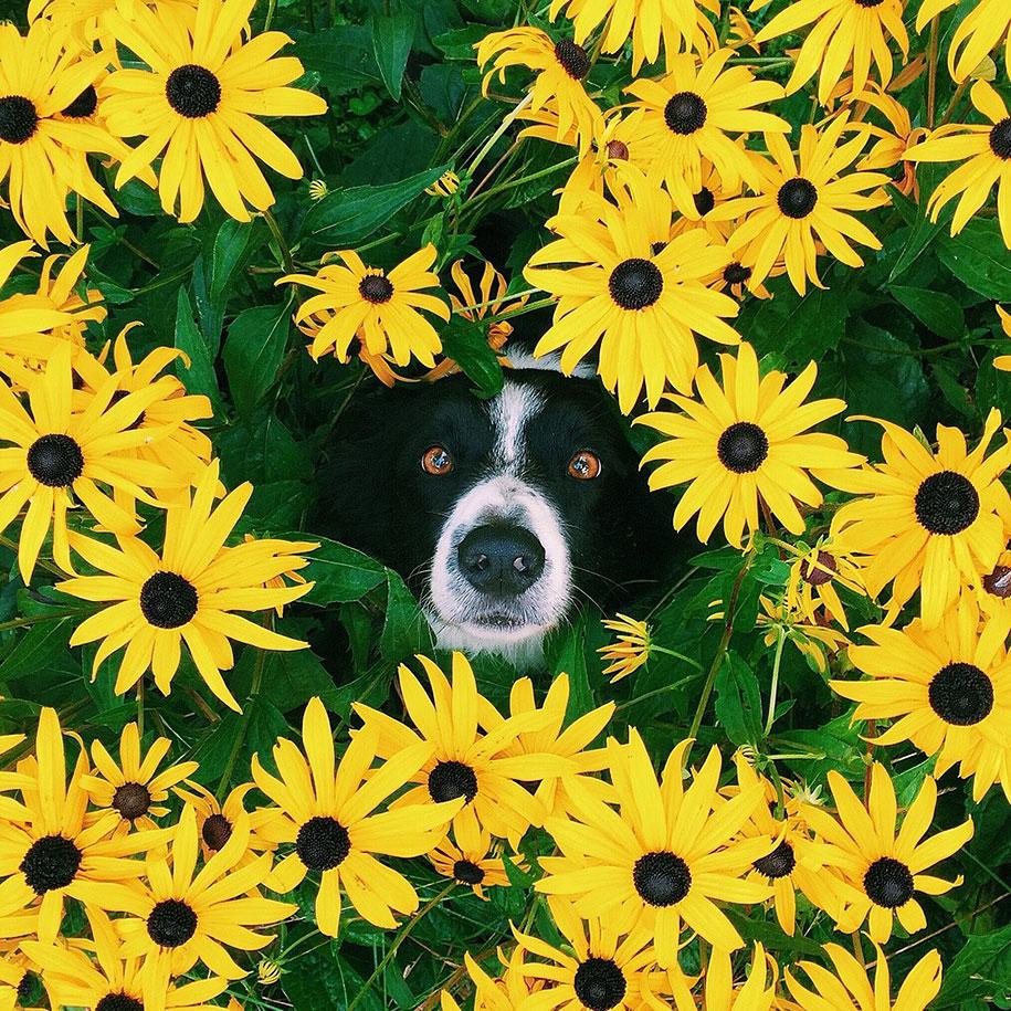 find-momo-dog-photography-andrew-knapp-1
